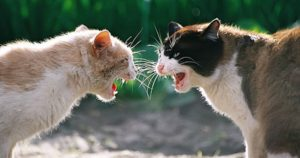 Fighting cats maul baby to death in India's Bihar state