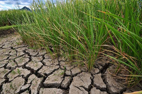 Govt announces relief after 206 blocks in 23 Bihar districts declared drought-hit