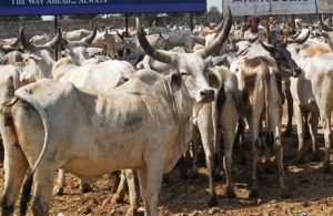 Nitish govt begins drive to shut all illegal slaughter houses in Bihar