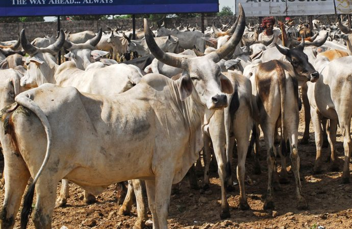 Cow vigilantes assault youths for carrying beef in Bihar