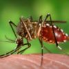 Dengue claims life of another doctor in Bihar, total cases mount to over 1,200