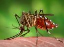 Dengue claims life of another doctor, senior official in Patna as toll mounts to three