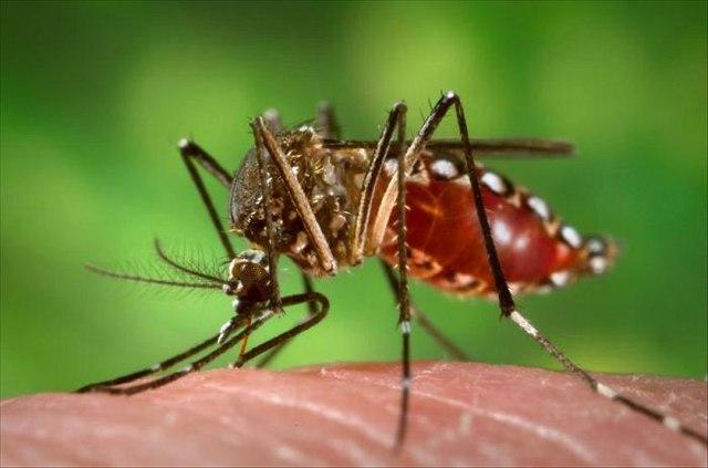 Patna dengue death Bihar, Patna dengue death, bihar dengue outbreak