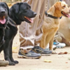 Bihar deploys specially-trained dogs to curb liquor smuggling