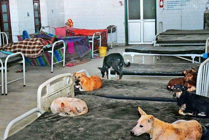 Govt orders probe as patients, dogs sleep side by side in top Bihar hospital