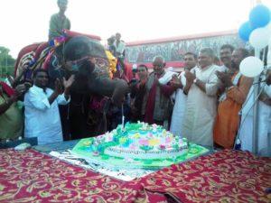 Video: Watch elephant Rani cutting 50-pound cake to celebrate her 8th birthday!