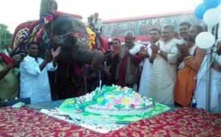 elephant birthday