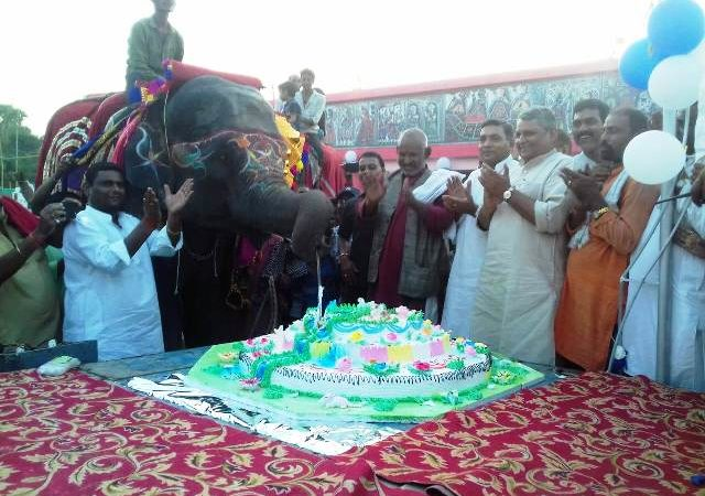 Video: Watch elephant Rani cutting 50-pound cake to celebrate her 8th birthday!