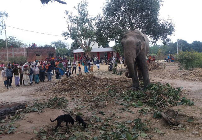 Elephant crushes drunk mahout to death after being told to dance