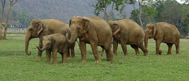 Language problem torments elephants in their new home in Jharkhand