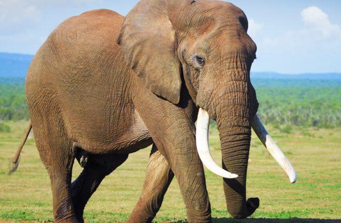 Elephant blamed for killing 15 villagers shot dead in Jharkhand
