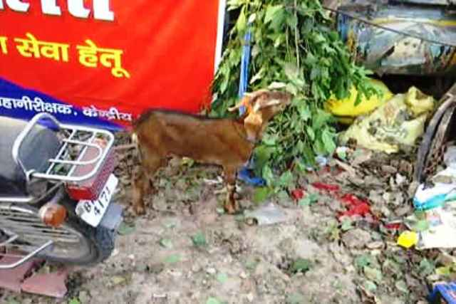 When Indian police accepted goat as 'bribe'