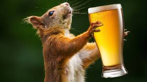 Rats! Look who is getting drunk in 'dry' Bihar