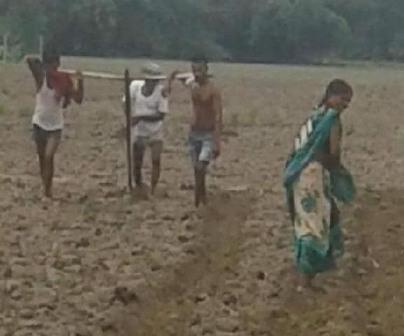 Poor Bihar villager yokes sons to plough like oxen to till farmland