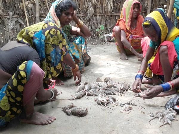 Hungry villagers eat rats as food scarcity hits many flood-hit areas in Bihar
