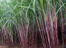 Bihar official dismissed for taking bribe from sugarcane minister's son-in-law