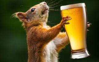 drunksquirrel1
