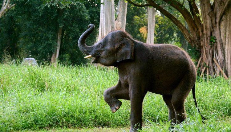 SeparatedElephant, Jharkhand, ElephantHerd, Dhanbad, ManAnimalConflicts,