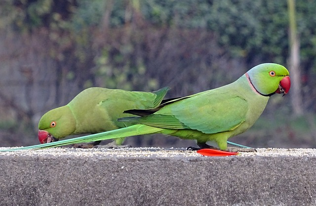 parrots questioned in delhi court, parrots produced in court delhi, parrots, delhi court, india
