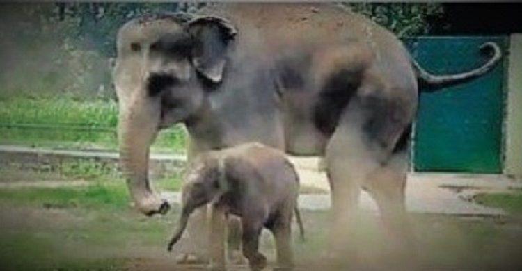 elephant, ormanjhi zoo, Ranchi, Jharkhand