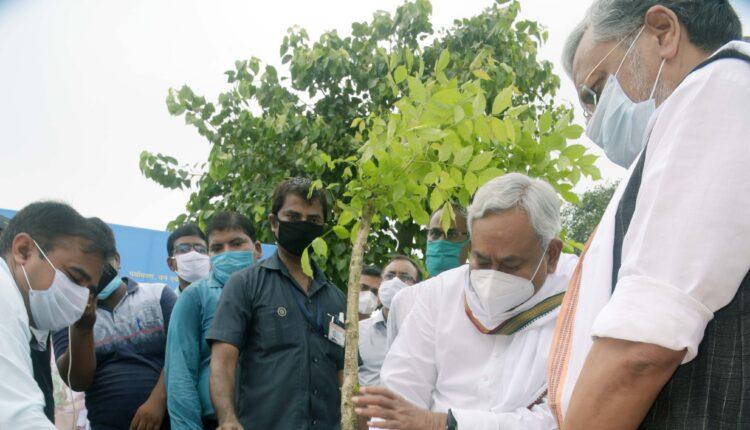 plantation, green cover, Bihar Hariyali Mission, Patli, Nitish Kumar, Patliputra, Bihar, Bihar News,