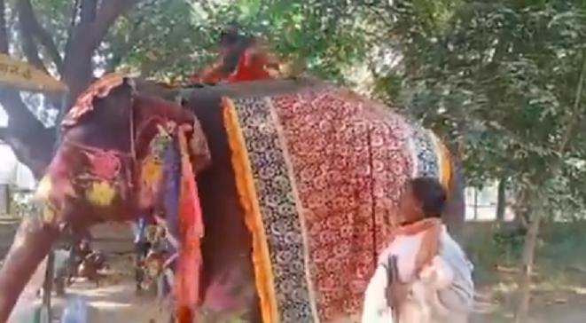 Baba Ramdev, Baba on elephant, Yoga guru, yoga on elephant, Mathura, UP, Ramdev yoga acts