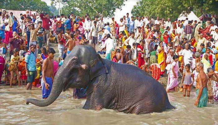 Sonepur fair, Harihar Kshetra fair, sonepur cattle fair, Bihar,Harihar Nath Temple, COVID-19, Coronavirus, Bihar news, Bihar