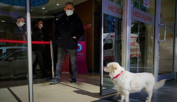 dog, sick master, dog at hospital, Turkey,Istanbul
