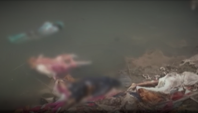 Ganga, Ganga water, COVID-19, dead bodies, Bihar, UP,Jal Shakti Ministry, NMCG