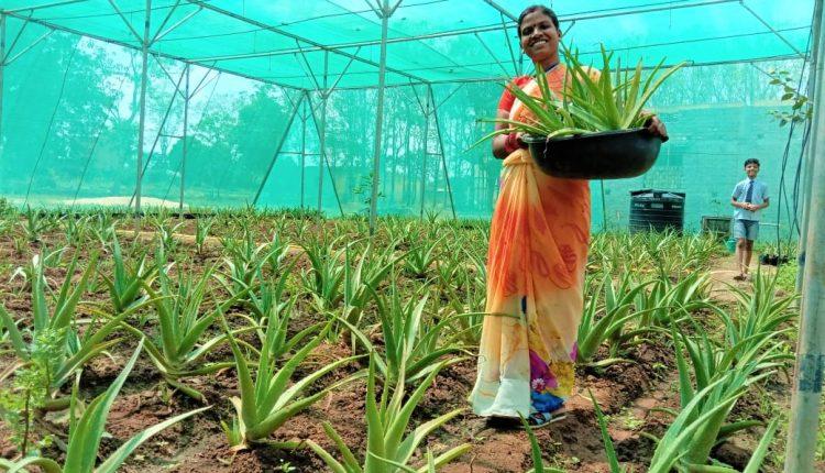 Aloe Vera, Aloe Vera village, Jharkhand, COVID-19, ICAR