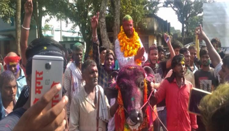 panchayat polls, buffalo, Bihar, Madhepura